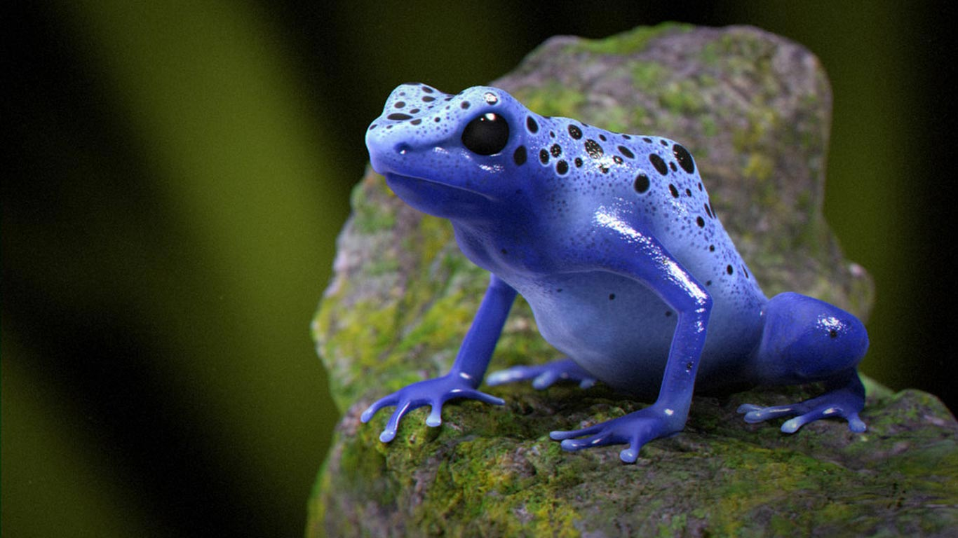 poison-frog_117899